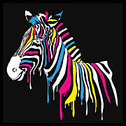 Pop Art Fototapety - Zebra 4536 - latexová